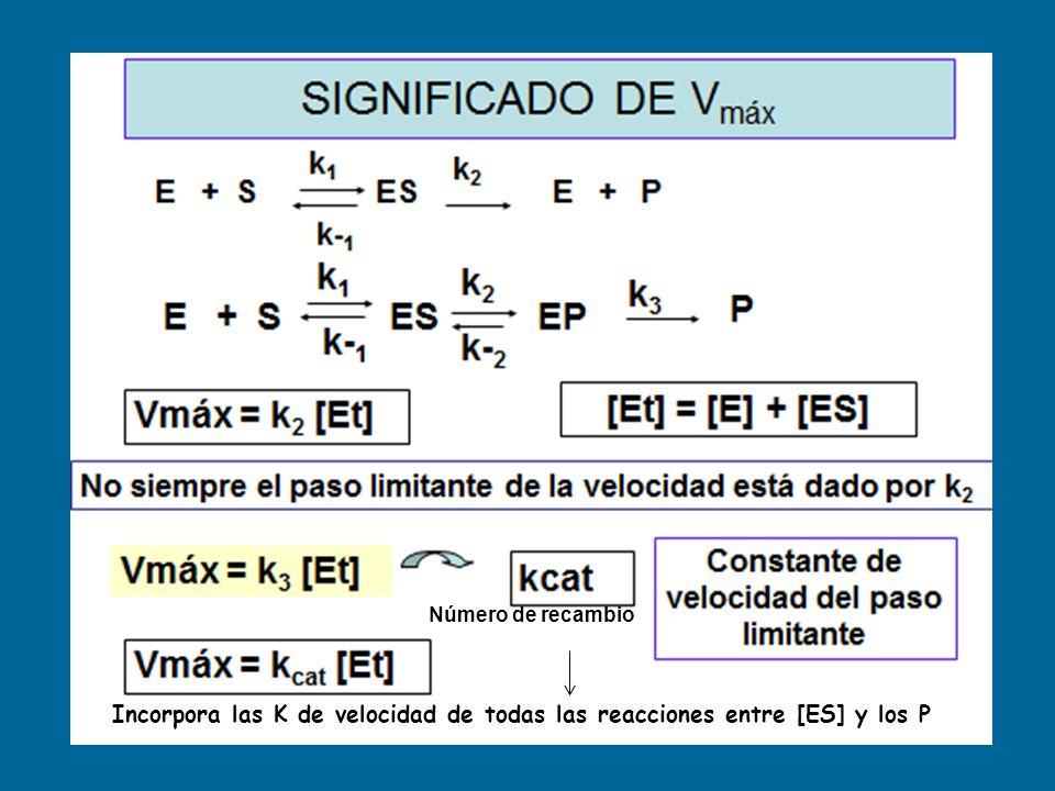 Número de recambio Incorpora las K de velocidad de todas las reacciones entre [ES] y los P